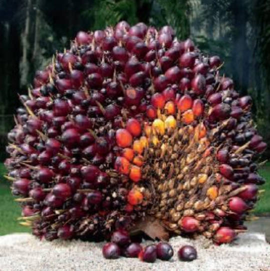 Palm oil, certified organic