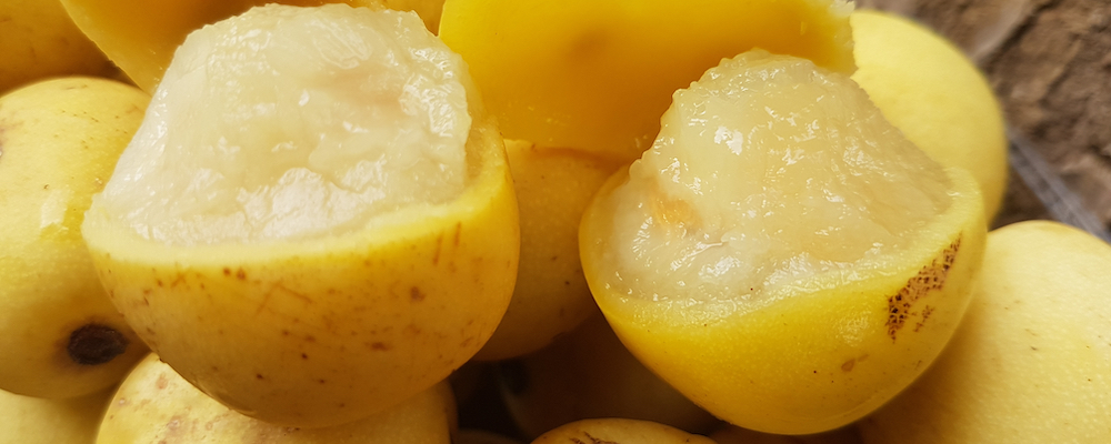 Marula oil, certified organic