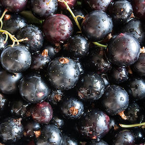Blackcurrant seed oil, NZ