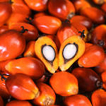 Palm oil, certified organic, RSPO certified