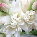 Tuberose essential oil, cosmetic grade